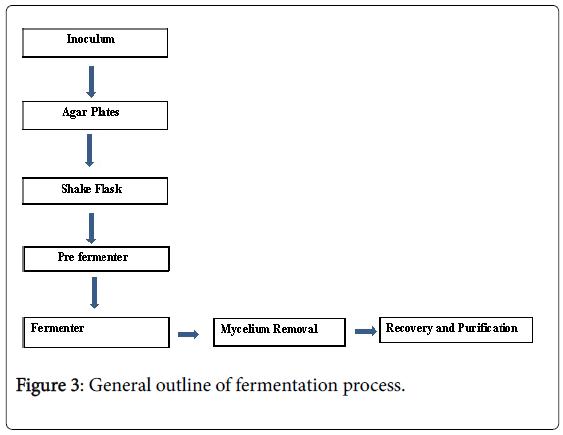 general-medicine-fermentation-process