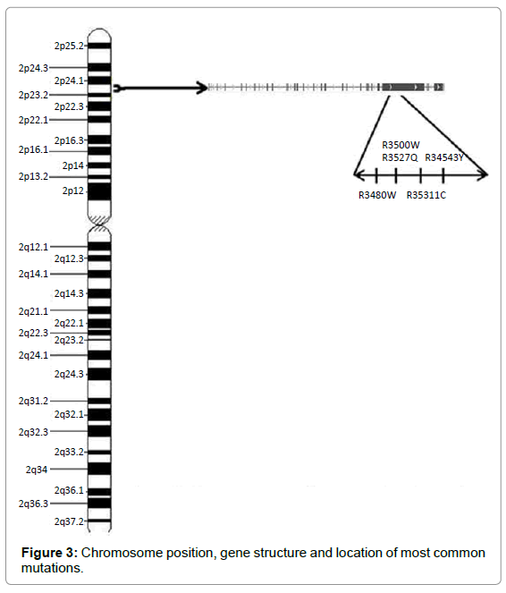 genetic-syndromes-gene-therapy-Chromosome-position