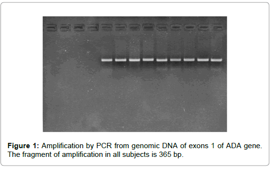 genetic-syndromes-gene-therapy-fragment-amplification