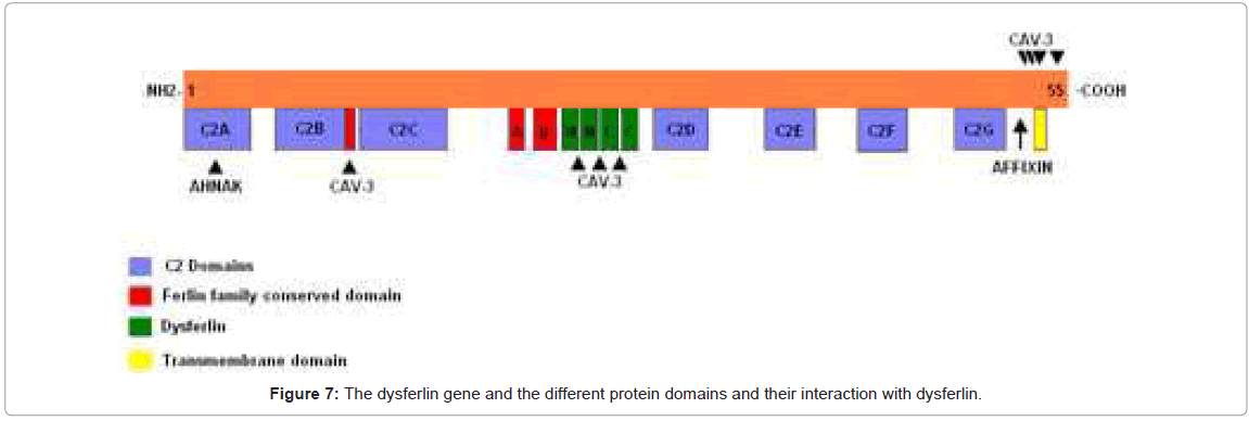 genetic-syndromes-gene-therapy-protein-domains