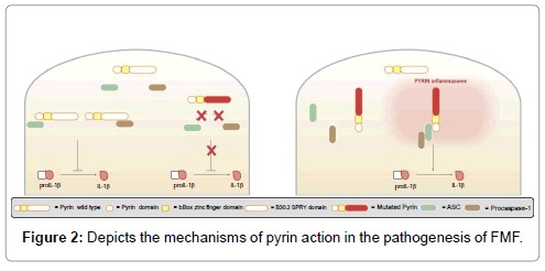 genetic-syndromes-gene-therapy-pyrin-action