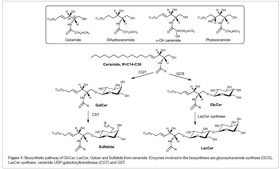 glycomics-lipidomics-Biosynthetic-pathway