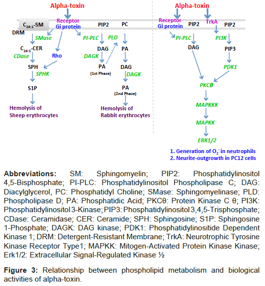 Glycomics-lipidomics-Extracellular-Signal-Regulated