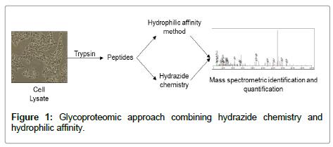 glycomics-lipidomics-Glycoproteomic-approach