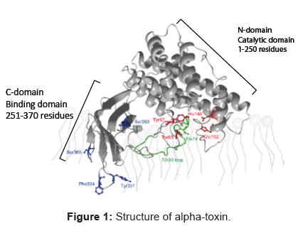 glycomics-lipidomics-Structure-alpha-toxin