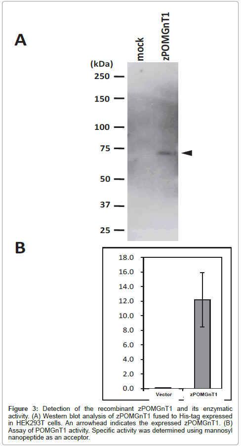 glycomics-lipidomics-enzymatic-blot