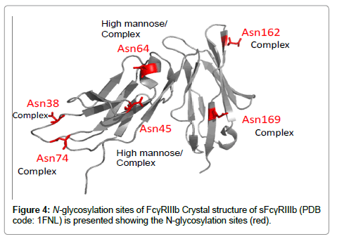 glycomics-lipidomics-glycosylation-sites