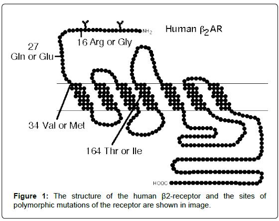 gynecology-obstetrics-polymorphic-mutations