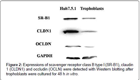 gynecology-receptor-class