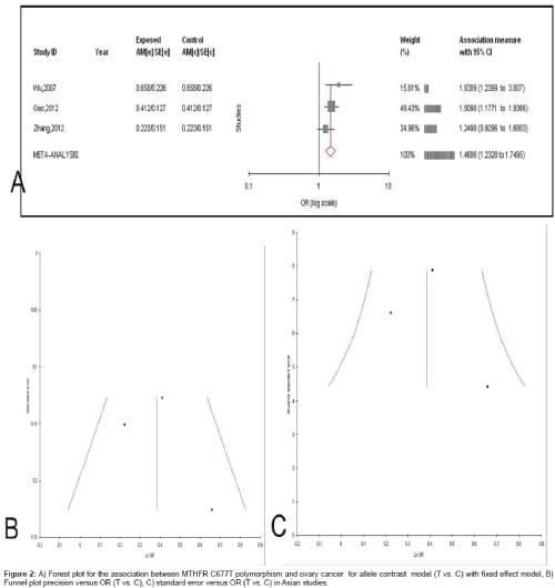 Methylenetetrahydrofolate Reductase Gene C677T Polymorphism