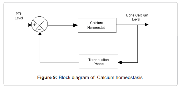 A Model Of Calcium Homeostasis Linked With Electrostrictive Energy. Wiring. Bones In Calcium Homeostasis Diagram At Scoala.co