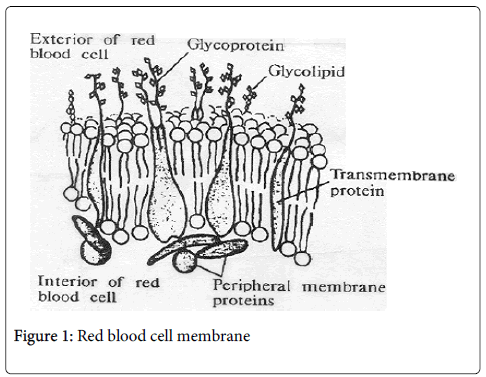 hereditary-genetics-blood-cell