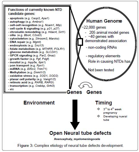 hereditary-genetics-development