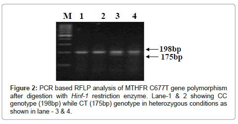 hereditary-genetics-gene-polymorphism