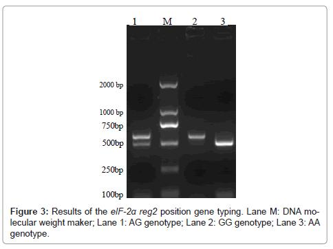 hereditary-genetics-gene-typing