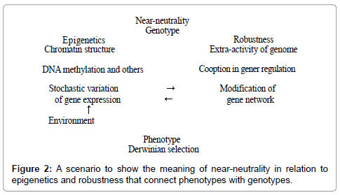 human-genetics-embryology-near-neutrality