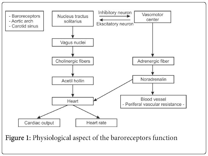 hypertension-Physiological-aspect