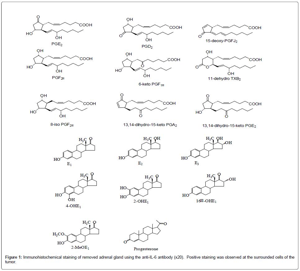 hypertension-immunohistochemical