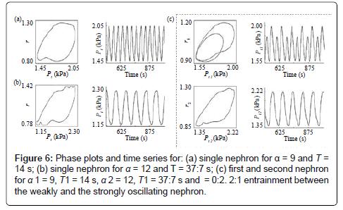 hypertension-phase-plots
