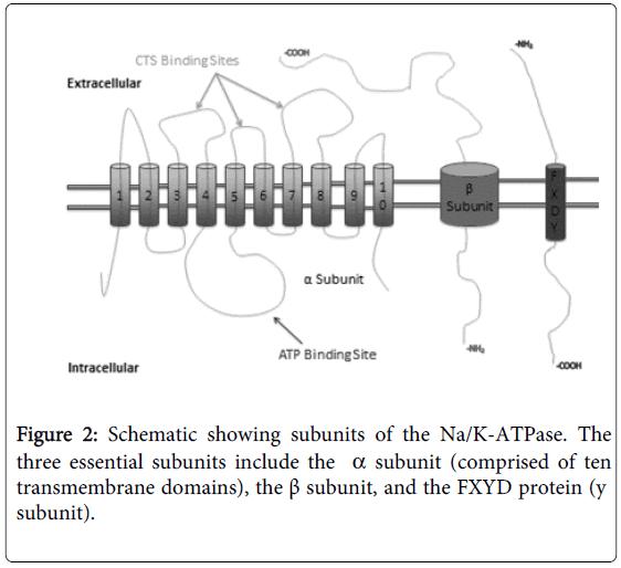 hypertension-schematic-subunits