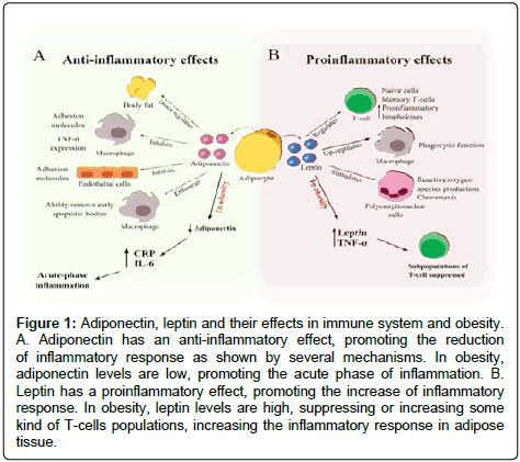 immunochemistry-immunopathology-Adiponectin-leptin-immune