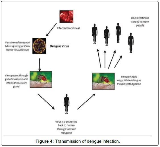 Dengue Diagnosis: Challenges and Opportunities   OMICS