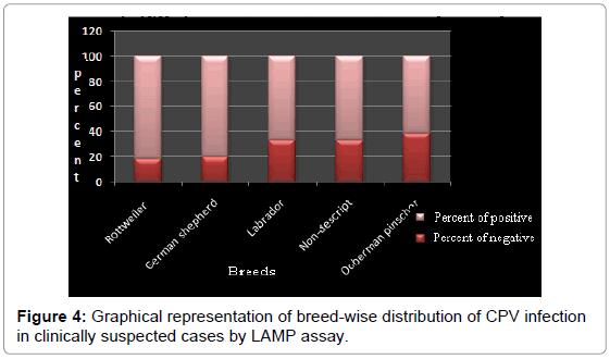 immunochemistry-immunopathology-breed-wise-infection