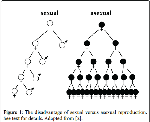Difference between asexual and sexual reproduction offspring americana
