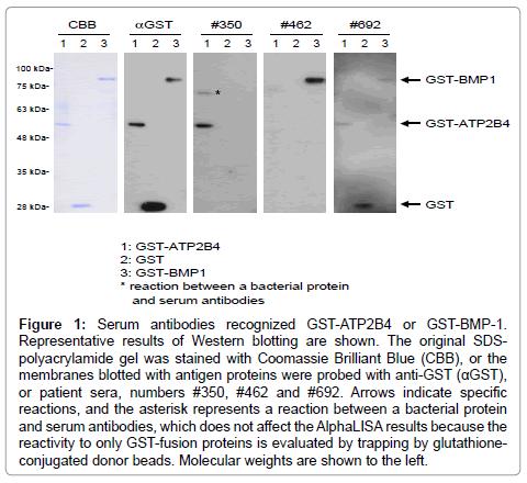 immunome-research-Serum-antibodies-recognized
