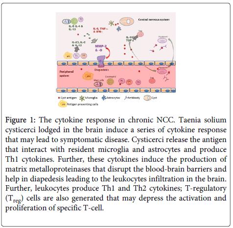 immunome-research-Taenia-solium-cysticerci