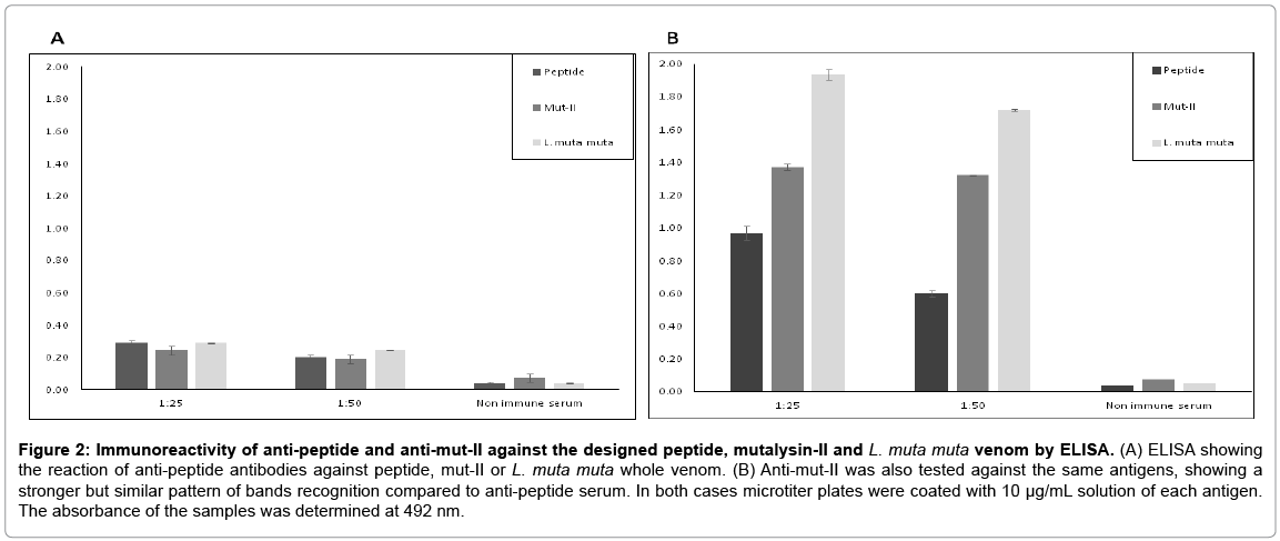 immunome-research-anti-peptide-antibodies