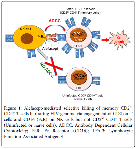 immunotherapy-Alefacept-mediated-selective