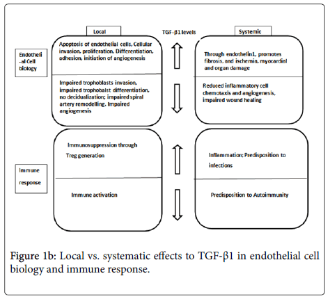 immunotherapy-endothelial-cell-biology