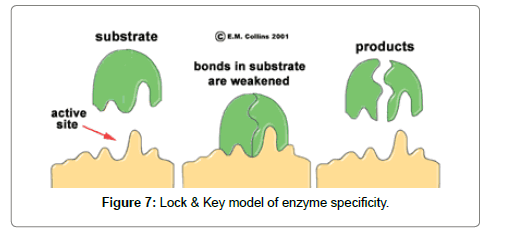 industrial-engineering-management-enzyme