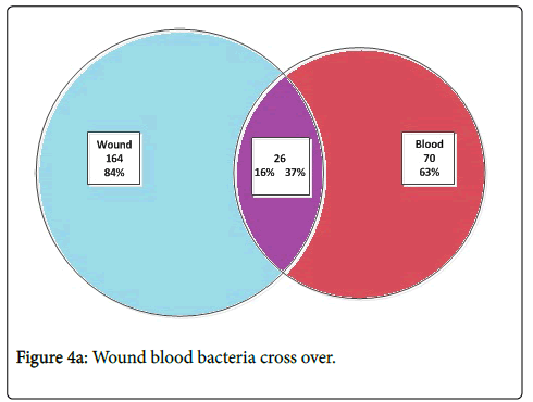 infectious-diseases-therapy-Wound-blood