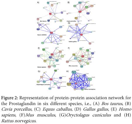 interdisciplinary-microinflammation-protein-protein-association