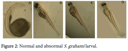 international-journal-biodiversity-abnormal-grahami-larval