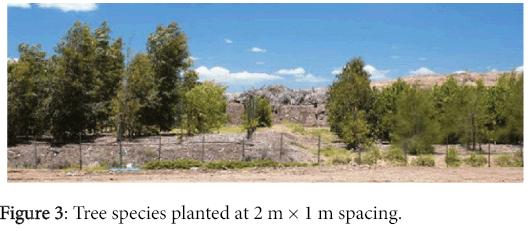 international-journal-waste-resources-Tree-species
