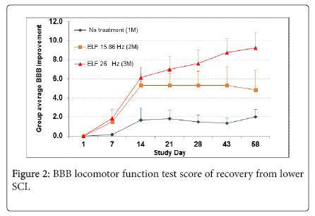 international-neurorehabilitation-BBB-locomotor-function