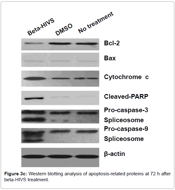 leukemia-apoptosis-related