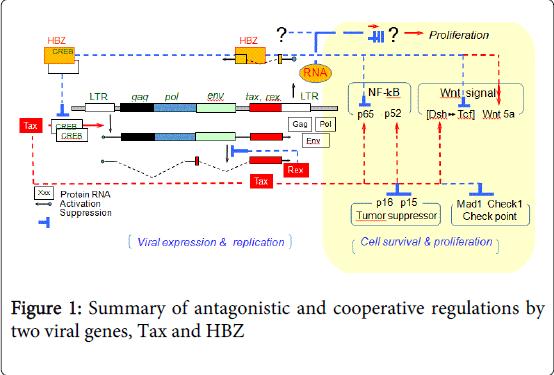 leukemia-cooperative-regulations
