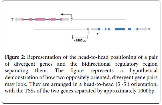 leukemia-divergent-gene-pairs