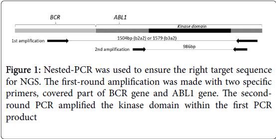 leukemia-kinase-domain