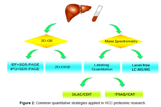 liver-HCC-proteomic-research