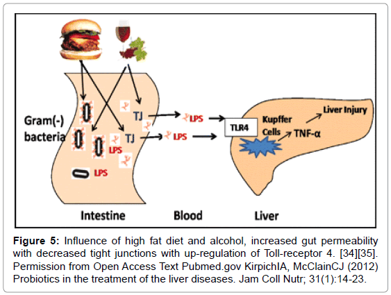 liver-high-fat-diet-alcohol