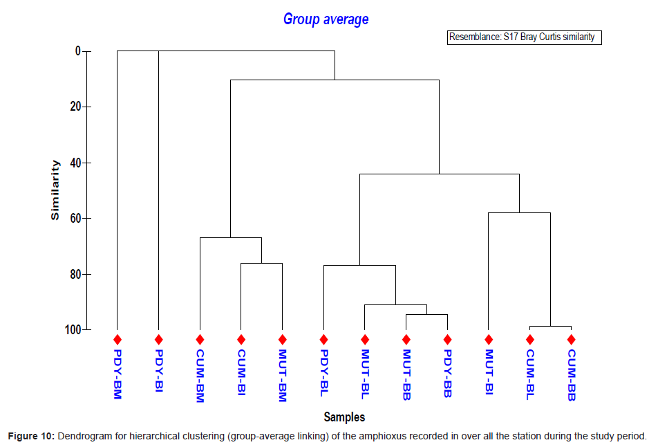 marine-science-research-Dendrogram-hierarchical-clustering