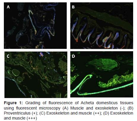 marine-science-research-Grading-fluorescence-Acheta