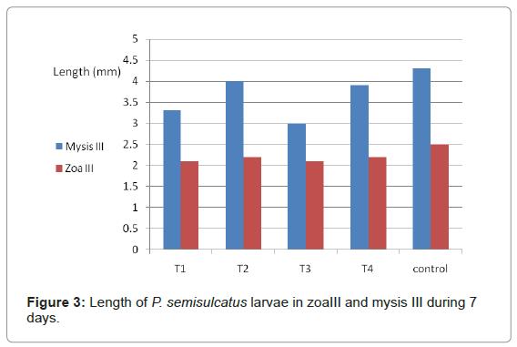 marine-science-research-Length-P-semisulcatus-larvae