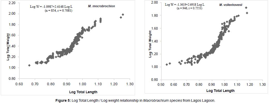 marine-science-research-Macrobrachium-species-Lagos-Lagoon