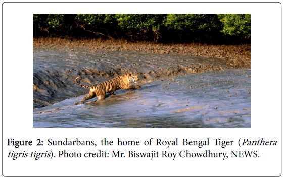 marine-science-research-development-Bengal-Tiger